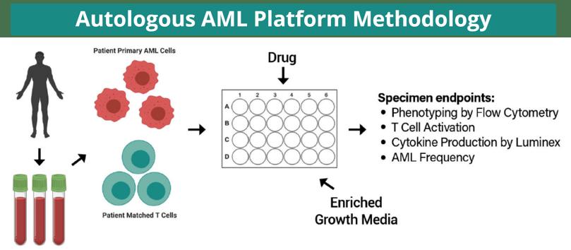 AML 1